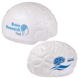 s0089 s0094 09 small large brain v1